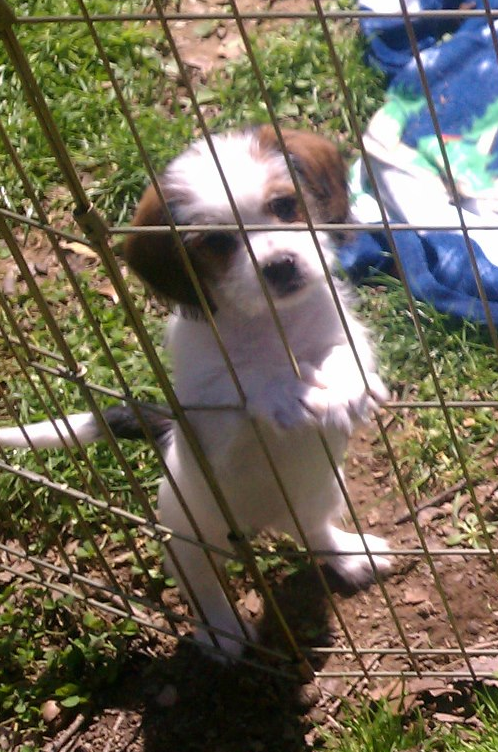 Millie puppy training