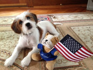 dog and flag