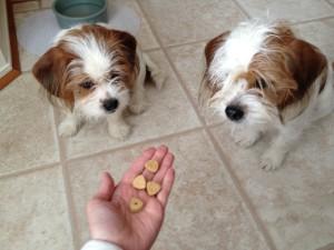 Nutro peanut butter treats